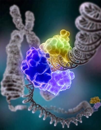 genes-pictures1