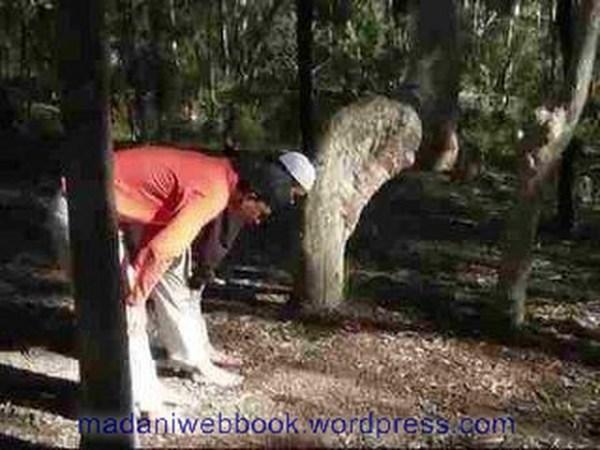 tree-doing-ruku-facing-kaba-to-allah-azawajal-2