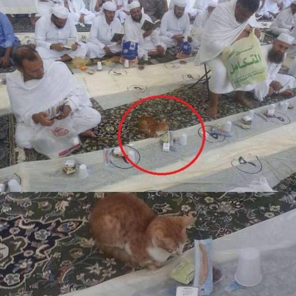 Subhanaallah, DImasjidil Haram Kucing pun Ikut berpuasa dan berbuka puasa bersama disetiap bulan Ramadhan.